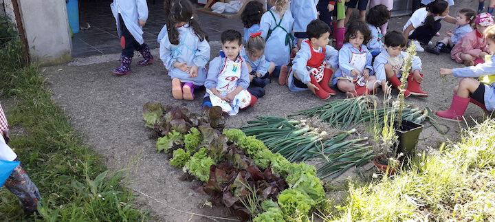 Finaliza nuestro primer curso con el Huerto de Infantil